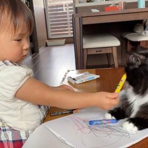 クレヨンを欲しがっていると勘違いされた猫 ラガマフィンA cat who was mistaken for wanting a crayon.Ragamuffin.