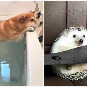 「かわいい」10分間腹が痛いほど爆笑する犬, 猫,動物のおもしろハプニング