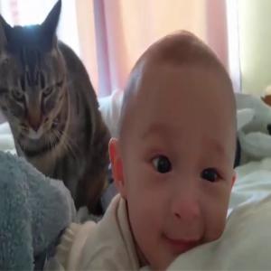 【可愛い動物】 – ペットの犬や猫の不可解な行動はとてもかわいいです