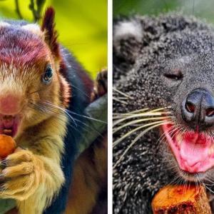 あなたがまだ知らないかわいすぎる動物たち