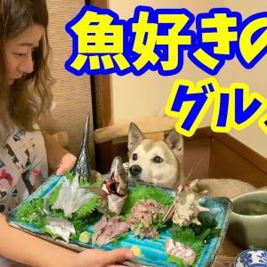【わんこと和食】伊豆で美味しい魚料理を食べるグルメ犬🐟2019年6月