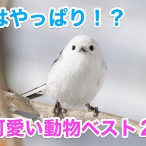 【可愛い】1位はやっぱり!?世界で最も可愛い動物ベスト20!【動物】
