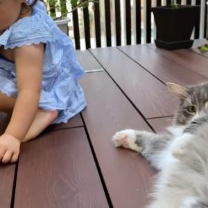 欲しいと思っていない葉っぱを渡される猫 ノルウェージャンフォレストキャットA cat whose leaves you don't need. Norwegian Forest Cat.