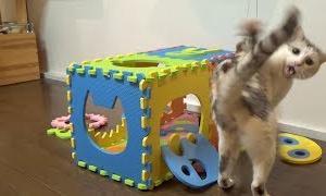 ジョイントパズルハウスを破壊する猫【ネコ吉LIFE】Cute Cat Videos part14