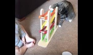 【動物 かわいい】可愛い猫とかわいい赤ちゃんの最高に面白い動画集!! Funny videos 夏彩