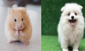 【面白い動物】世界第一番可愛い動物  – So cute animals – Những con vật dễ thương nhất hành tinh #5