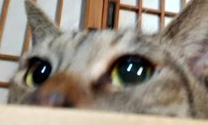 かご猫LIVE配信200926