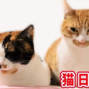 2020.9.27 みゃうの猫日記(説明欄に時間有)  【Miaou みゃう】