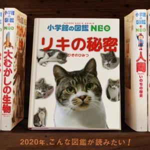 【猫ライブ】リキちゃんの月曜の夜ふかしはこれからライブ!LIVE☆EOSRでライブ配信 りきちゃんねるライブ  Cat live stream