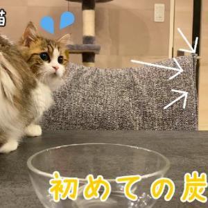 初めて炭酸水をみたビビり猫の反応が可愛いすぎる!