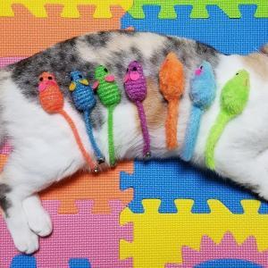 カラフルネズミで遊ぶ猫【ネコ吉LIFE】Cute Cat Videos part30