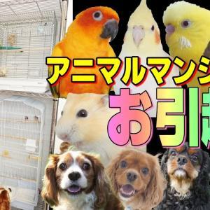 【動物と暮らす】引っ越しました・アニマルタワーマンション完成|メタルラック アレンジ 面白可愛い多頭飼い動画 1109
