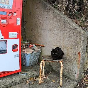 猫島でイスにいたかわいい猫をナデて腰トントンしたら癒された 野良猫 感動猫動画