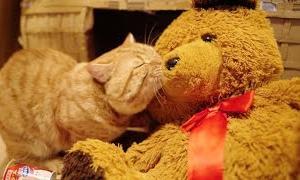 【猫のグルーミング】ぬいぐるみが好きすぎるねこ。【猫とぬいぐるみ】Cat grooms a teddy bear