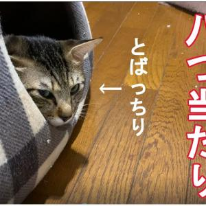 また喧嘩した猫。Another cat who quarreled. 另一只吵架的猫。
