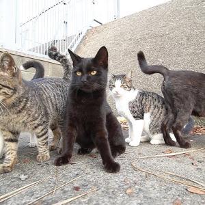 かわいい猫たちにカルカン(kalkan)とちゅ~るとカリカリを給餌したらうまそうに食べた ASMR 野良猫 感動猫動画
