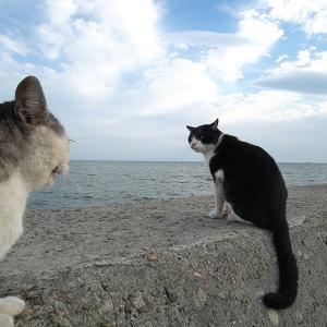 仲間に入れてもらえないかわいそうな猫にカルカン(kalkan)とちゅ~るを給餌したらうまそうに食べた 野良猫 感動猫動画 ASMR