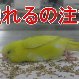 【インコ・オウム】危険な状態3選