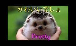 【可愛い動物】 ハリネズミってカワイイ!!