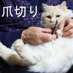 猫たちのの爪切り Clipping a Cat's Claws 210307