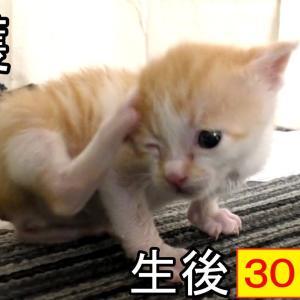 搔きたいのに届かない、頑張る子猫が可愛い