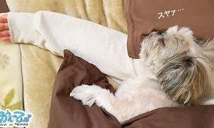 朝起きれません。犬が腕を勝手に枕にしているので。