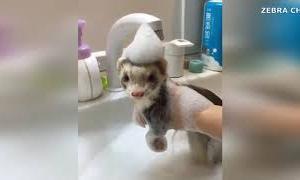 可愛い動物たち集合【癒し動画】