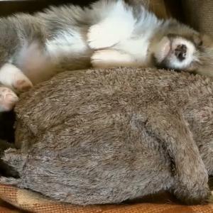 「子犬の寝顔」可愛い子犬の癒される動画