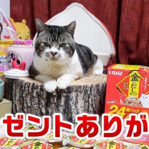 リキちゃんにこどもの日のプレゼントが届きました🎵美味しいごちそうをモグモグ&素敵なアイテム☆【リキちゃんねる・猫動画】Cat video キジシロねこのいる暮らし