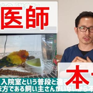 【インコ・オウム】鳥さんを不幸にしないための社会化について