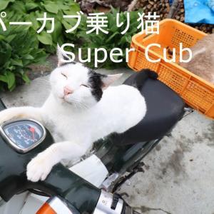 スーパーカブ乗りねこ Honda Super Cub 210618