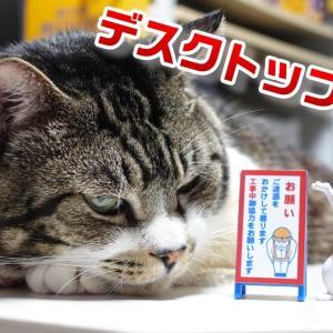 面白可愛いミニチュア【デスクトップ看板】を猫の横に並べたらお似合いすぎw☆ガチャガチャ新商品【リキちゃんねる 猫動画】