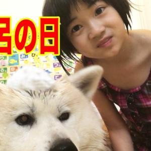 秋田犬お風呂で満喫!のんびり気分転換♪Bathe my dog