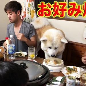 哀愁たそがれ.そうすけ秋田犬♪お好み焼きと宝くじ!She takes a walk with her dog