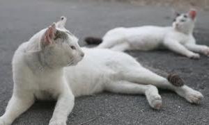 Cat Live 仲のいい猫をライブ配信 野良猫 感動猫動画