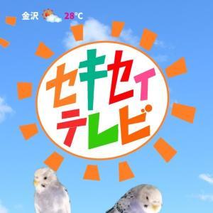 セキセイテレビ【セキセイインコ】【#23】