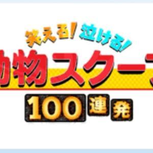 動物スクープ100連発  2021年7月29日 FULL SHOW HD 【LIVE】