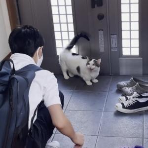 外に出たい猫を巧妙にかわす息子よりもおもしろい猫