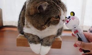 いたずらパンダとねこ。-Mischievous panda and Cats.-