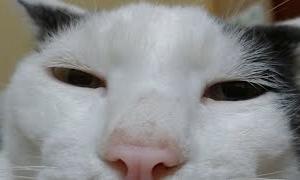 かご猫LIVE配信 210918 7時まで