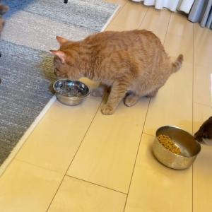ポメラニアンと猫、そしてカワウソのいる休日