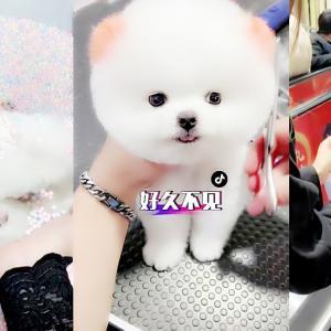 面白いかわいい子犬です。一番可愛い動物です。 | Funny and Cute Puppies  – Cutest Animals #1