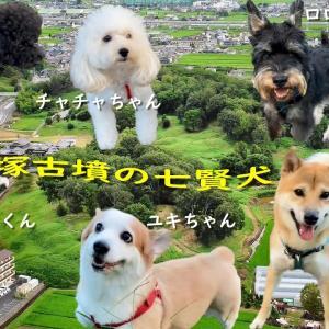 犬と散歩[ 153-新沢千塚古墳群 七犬七色 ] 明日香 奈良 Walking with a dog around Asuka, Nara, Japan