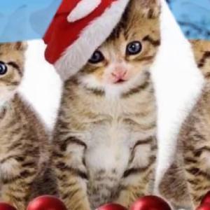 【クリスマス】動物のたまらなく可愛いコスプレ集