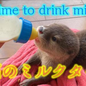 ミルクを飲むカワウソの赤ちゃんが可愛すぎたBaby otter drinking milk is very cute
