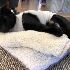 我が猫の避妊手術
