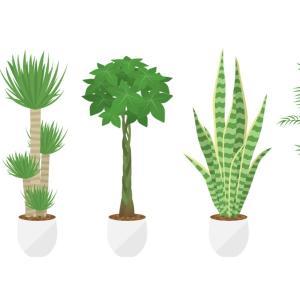 旅行中、観葉植物の水やりどうする?