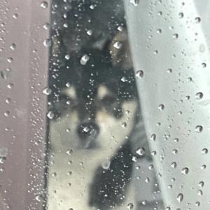 雨でしたが眠れました。