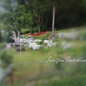 憧れるお隣さんのお庭♪