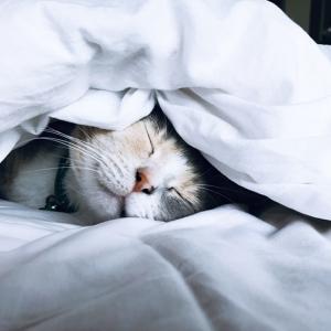 【今夜こそぐっすり眠りたい!】眠りを誘う癒しのCD3枚を厳選